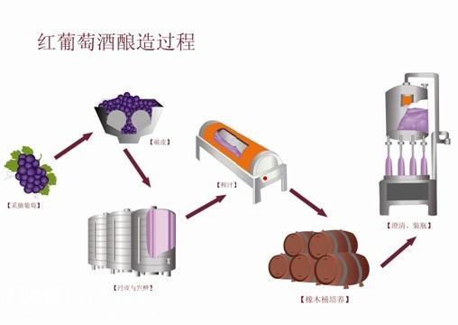 红葡萄酒酿造过程